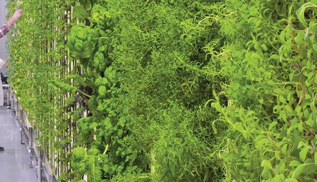 Entreprendre à l'ère du green business